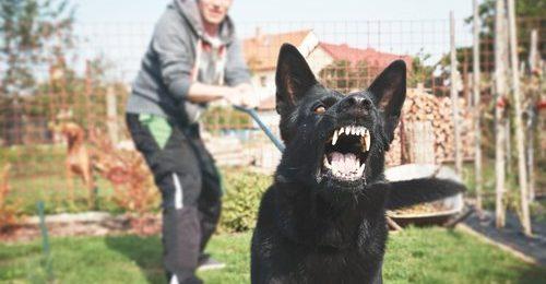 after a dog bites you
